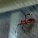 Voorkom insecten in huis